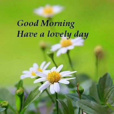 Good morning have a lovely day nature quote